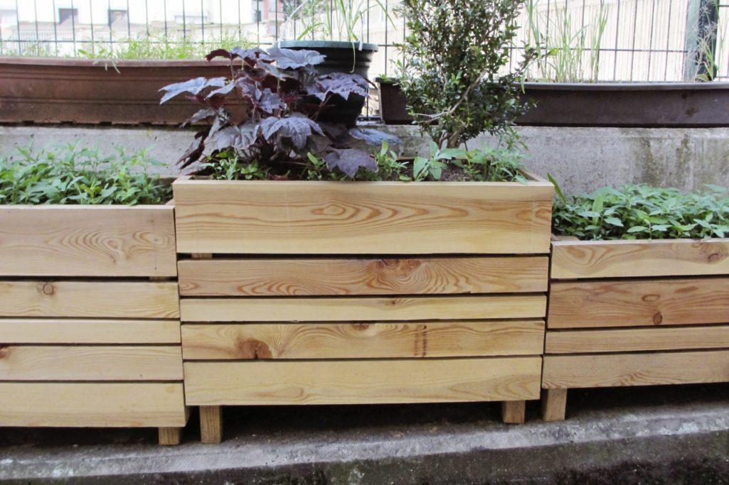 Cultiver ses plantes aromatiques en ville